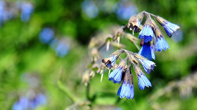 Bild von Blume